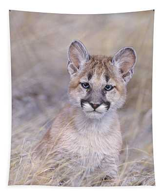 Mountain Lion Cub In Dry Grass Tapestry