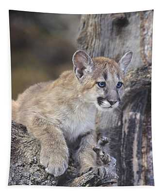 Mountain Lion Cub On Tree Branch Tapestry