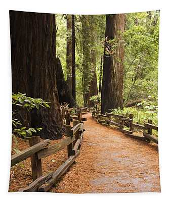 Muir Woods Trail Tapestry