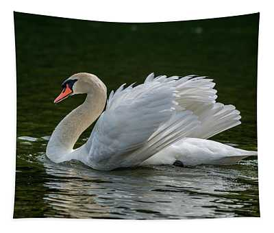 Mute Swan Cygnus Olor Displaying Tapestry