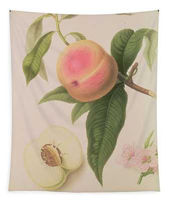 Noblesse Peach Tapestry