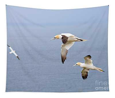 Northern Gannets In Flight Tapestry