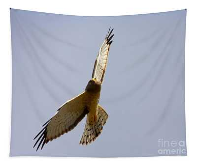 Northern Harrier Banking Tapestry