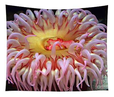 Northern Red Anemone Tapestry