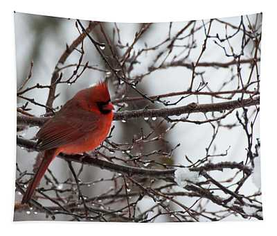 Northern Red Cardinal In Winter Tapestry