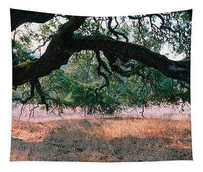 Oak Tree On A Field, Sonoma County Tapestry