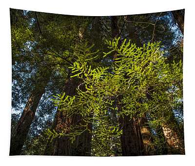 Old Growth Tapestry