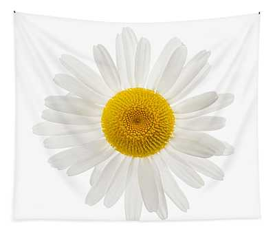 Common Daisy Tapestries