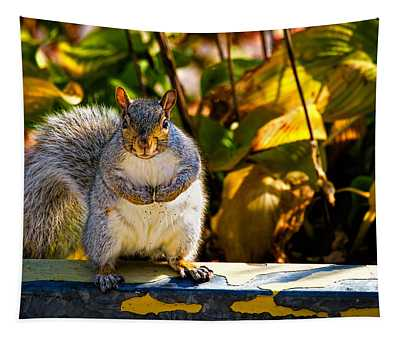 One Gray Squirrel Tapestry