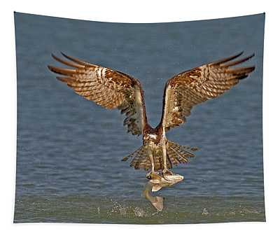 Osprey Morning Catch Tapestry