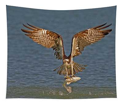 Tapestry featuring the photograph Osprey Morning Catch by Susan Candelario