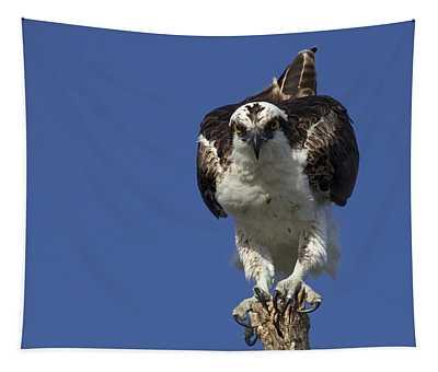 Osprey Photo Tapestry