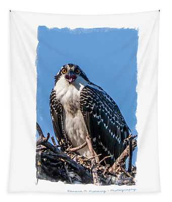 Osprey Surprise Party Card Tapestry