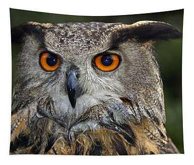 Owl Bubo Bubo Portrait Tapestry