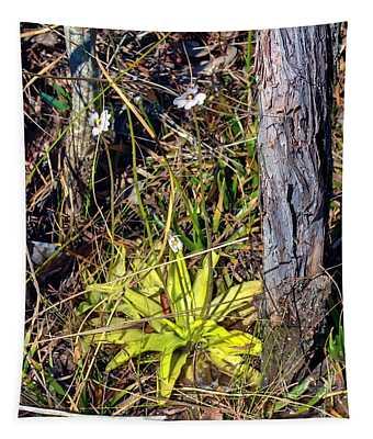 Panhandle Butterwort Tapestry
