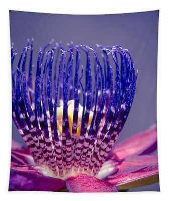 Passiflora Alata - Ruby Star - Ouvaca - Fragrant Granadilla -  Winged-stem Passion Flower Tapestry