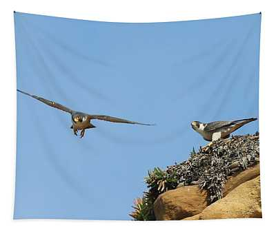 Peregrine Falcons - 1 Tapestry