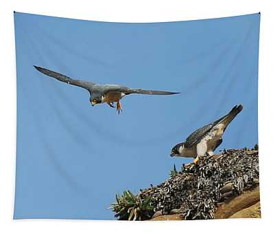 Peregrine Falcons - 6  Tapestry