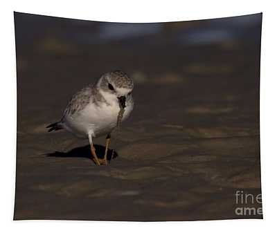 Piping Plover Photo Tapestry