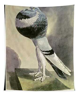 Portrait Of  Pouter Pigeon Coloured Engraving Tapestry
