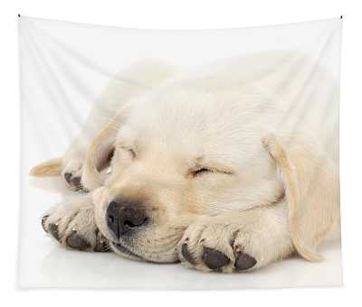 Puppy Sleeping On Paws Tapestry