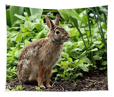 Ready For Takeoff - Cottontail Rabbit Tapestry