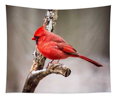 Red Bird Gazing Tapestry