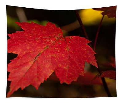 Red Maple Leaf In Fall Tapestry