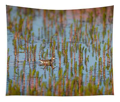 Red-necked Phalarope Phalaropus Tapestry