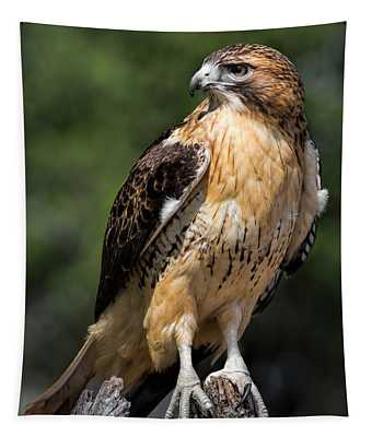 Red Tail Hawk Portrait Tapestry