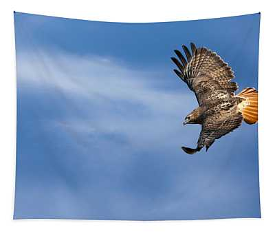 Red Tailed Hawk Soaring Tapestry