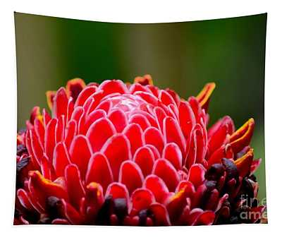 Red Torch Ginger Flower Head From Tropics Singapore Tapestry
