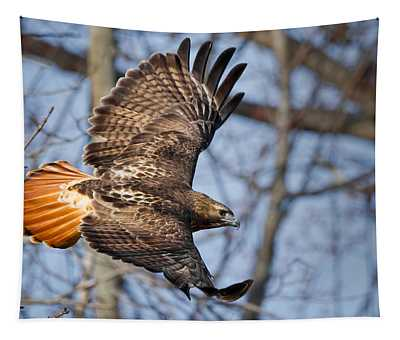Redtail Hawk Tapestry