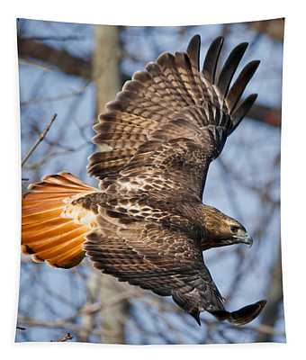 Redtail Hawk Square Tapestry
