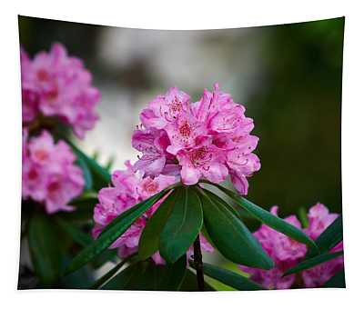 Rhododendron Tapestry