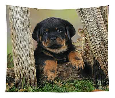 Designs Similar to Rottweiler Puppy Dog