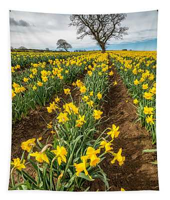 Rows Of Daffodils Tapestry