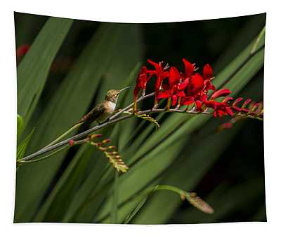 Rufous Hummingbird Female No. 1 Tapestry