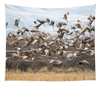 Sandhill Crane Explosion Tapestry