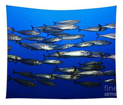 School Of Pacific Sardines 5d24927 Tapestry