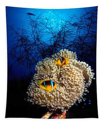 Sea Anemone And Allards Anemonefish Tapestry