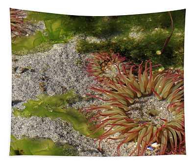 Sea Anemone Tapestry