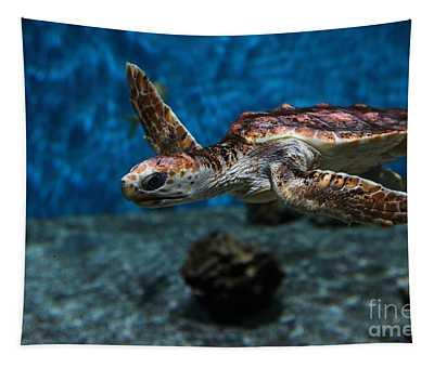 Sea Turtle 5d25083 Tapestry