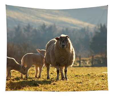 Sheep In Pasture Tapestry