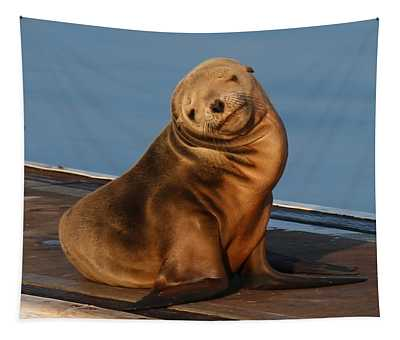 Shy Sea Lion Pup  Tapestry