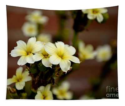 Sisyrinchium Striatum Tapestry