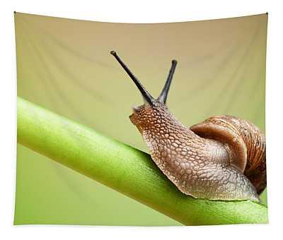 Snail On Green Stem Tapestry