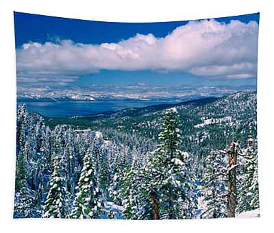 Snow Covered Pine Trees In A Forest Tapestry