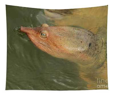 Soft Shell Tapestry
