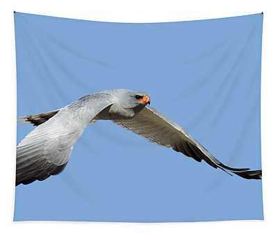 Southern Pale Chanting Goshawk In Flight Tapestry